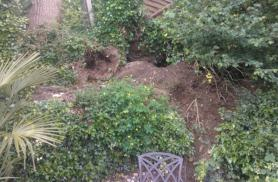 Badgers in my Garden